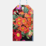 Polyanthus Flowers Gift Tags
