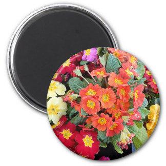 Polyanthus Flowers Magnet