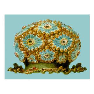 Polycyclus cyaneus, Ernst Haeckel Postcard