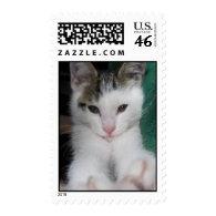 Polydactyl Mitten Kitten Postage