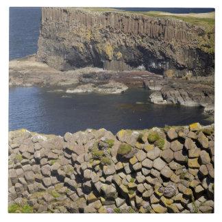 Polygonal basalt, Staffa, off Isle of Mull, Large Square Tile
