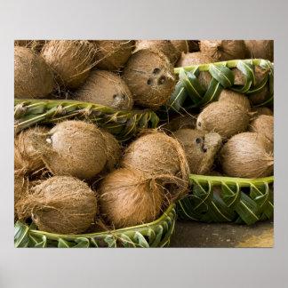 Polynesia, Kingdom of Tonga. Display of coconuts Poster