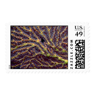Polyp-laden sea fan stamps