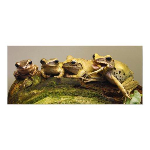 Polypedates común Leucomystax de la rana arbórea Invitación 10,1 X 23,5 Cm