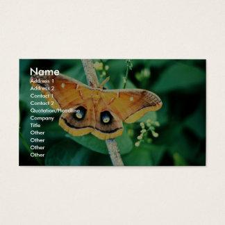 Polyphemus Moth Business Card