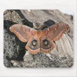 Polyphemus Moth Mouse Pad