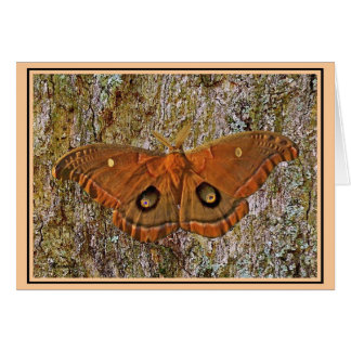 Polyphemus Moth Nature Note Card
