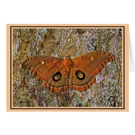 Polyphemus Moth Nature Note Card