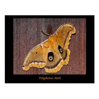 Polyphemus Moth Postcard