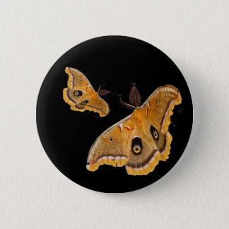 Polyphemus Moths Button