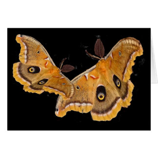 Polyphemus Moths Card