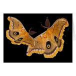 Polyphemus Moths Greeting Card