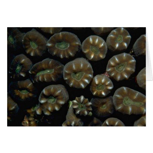Polyps coralinos duros hermosos de Indonesia Felicitaciones