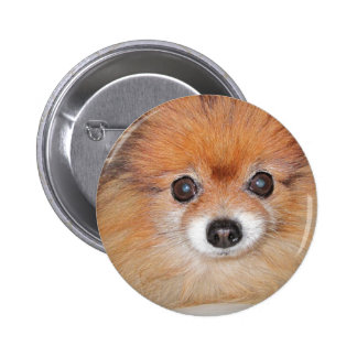 pom.png pinback button