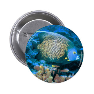 Pomacanthus Fish Pinback Buttons
