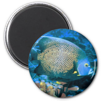 Pomacanthus Fish 2 Inch Round Magnet