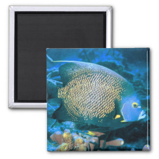 Pomacanthus Fish 2 Inch Square Magnet