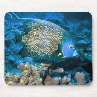 Pomacanthus Fish Mouse Pad