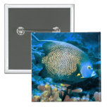 Pomacanthus Fish Pinback Button