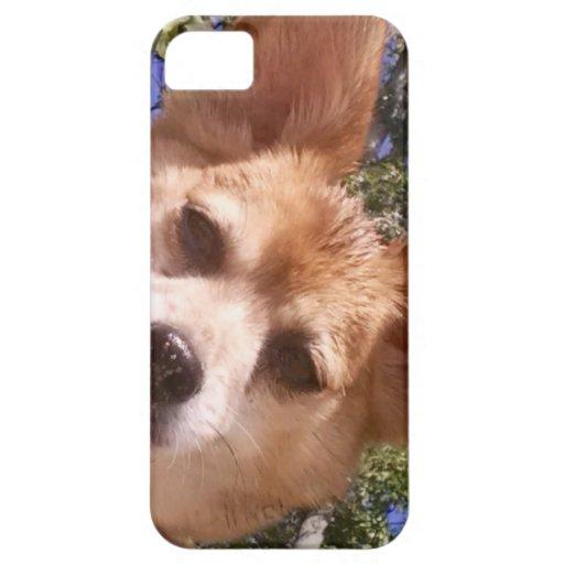 Pomchi iPhone 5 Cover