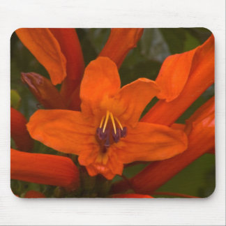 Pomegranate Blooms Mouse Pad