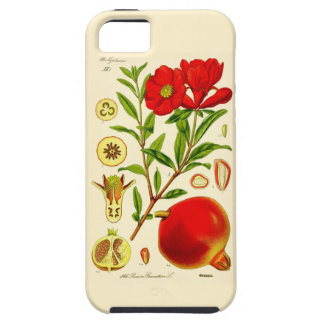 Pomegranate iPhone 5 Cases