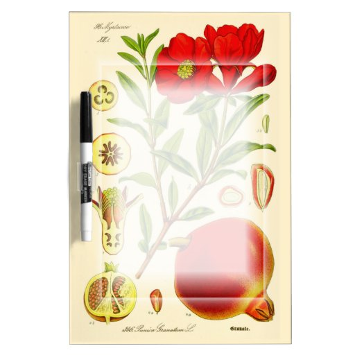 Pomegranate Dry-Erase Whiteboards