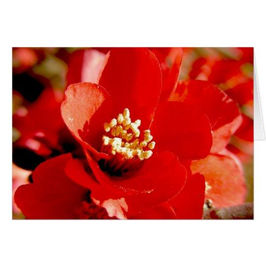 Pomegranate Flower Card