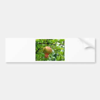 Pomegranate hanging on tree bumper stickers