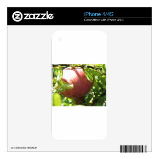 Pomegranate hanging on tree decals for iPhone 4