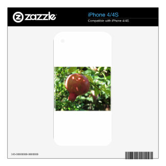 Pomegranate hanging on tree iPhone 4S decal
