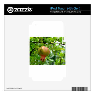 Pomegranate hanging on tree decal for iPod touch 4G