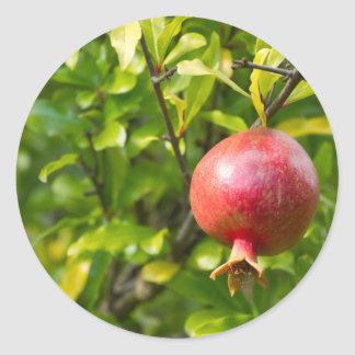 Pomegranate on Branch Classic Round Sticker