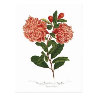 Pomegranate Post Cards