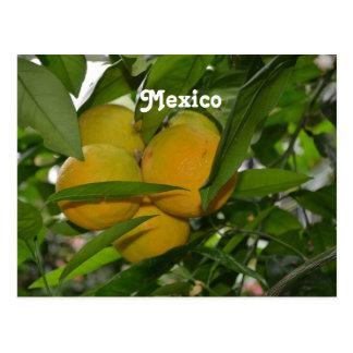 Pomelo de México Postal