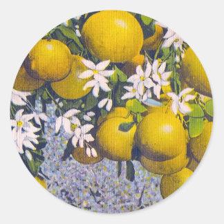 Pomelo y flores en la Florida Pegatina Redonda