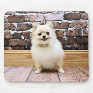 Pomeranian - Abby Vanity Collar Mousepads