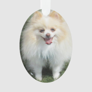 Pomeranian Acrylic Ornament