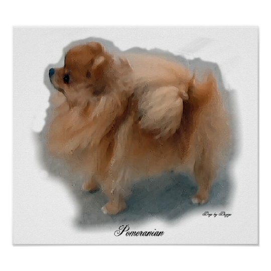 Pomeranian Art Prints