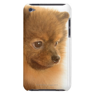 Pomeranian Barely There iPod Cover