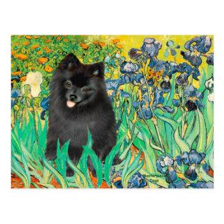 Pomeranian (black) - Irises Postcard