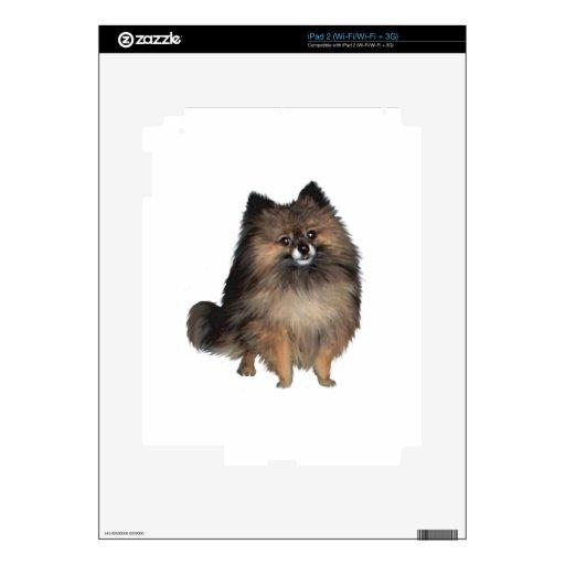 Pomeranian - brindle calcomanías para el iPad 2