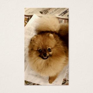 Pomeranian Business Cards