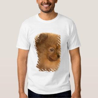 Pomeranian Camisas