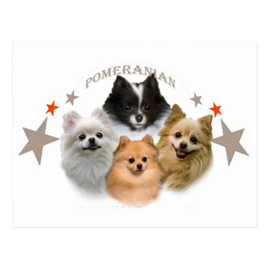 Pomeranian Can't Have Just One Postcard