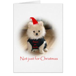Pomeranian Christmas card