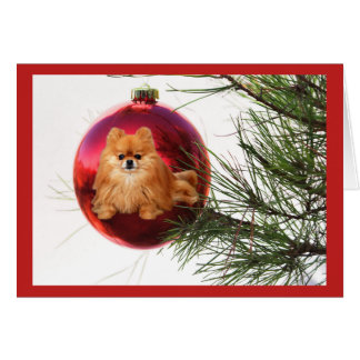 Pomeranian  Christmas Card Red Ball