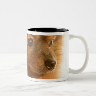 Pomeranian Coffee Mugs