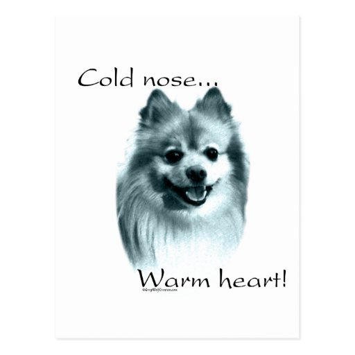 Pomeranian Cold Nose Warm Heart Postcard
