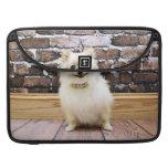Pomeranian - cuello de la vanidad de Abby Fundas Macbook Pro